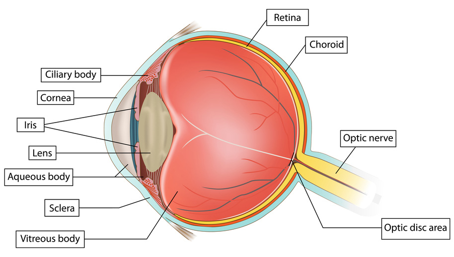What are Retinal Tears or Detachments and What Should I Do ...