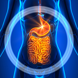 gut health enzymes